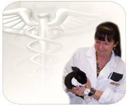 curso de enfermeria veterinaria y primeros auxilios