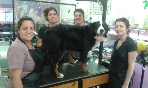curso de estilistas caninos