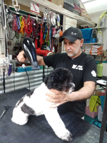 curso de peluqueria canina avellaneda