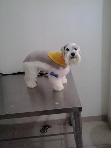 curso de peluqueria canina comercial