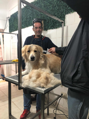 curso de peluqueria canina comercial peluquero canino