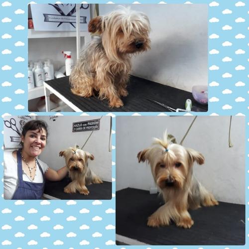 curso de peluquería canina lanús