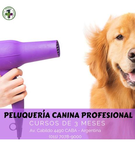 curso de peluquería canina profesional