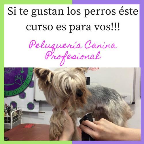 curso de peluquería canina profesional online