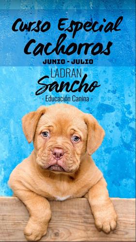 curso educación canina especial cachorros