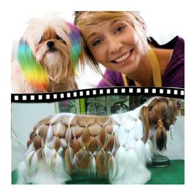Curso Estilista Canino Profesional Peluqueria Canina X Email