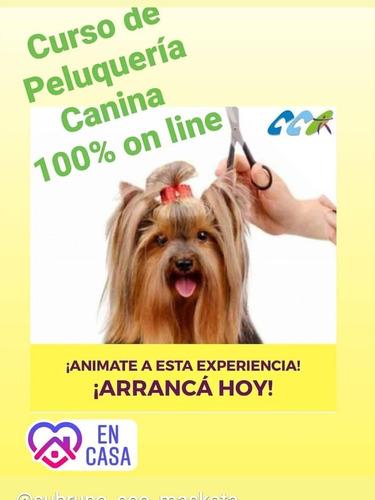 curso on line de peluquería canina