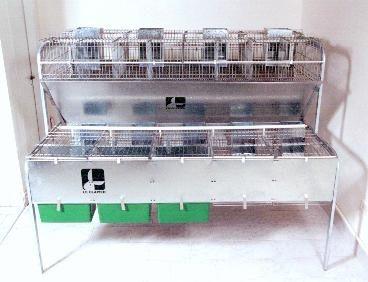 cursos-capacitación- cunicultura- cría industrial conejos