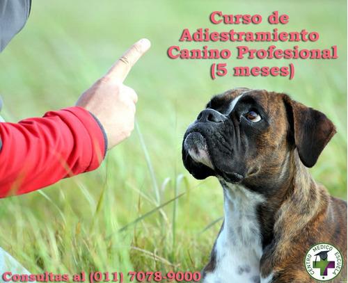 cursos de adiestramiento canino profesional