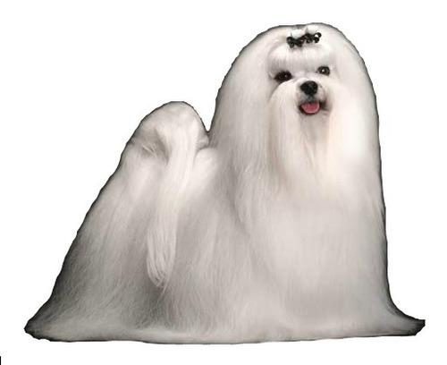 cursos de estética canina - fénixcan