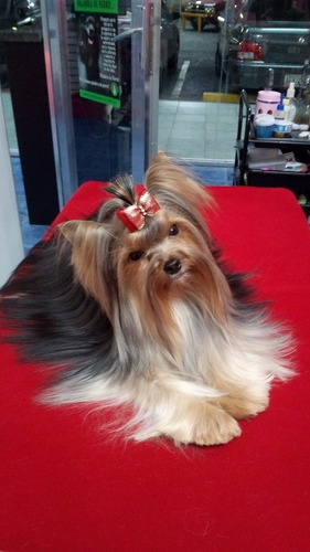 cursos de peluqueria canina freddy guzmán avalada me