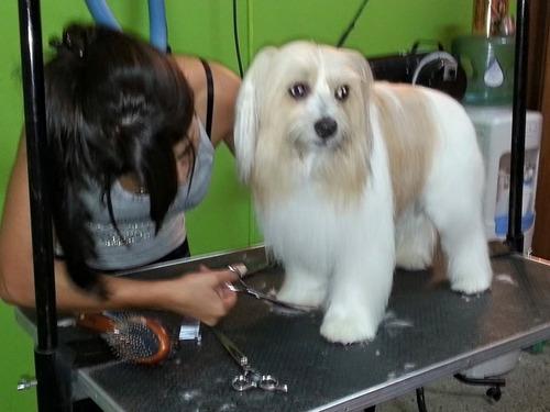 cursos de peluqueria canina zona oeste. escuela habilitada