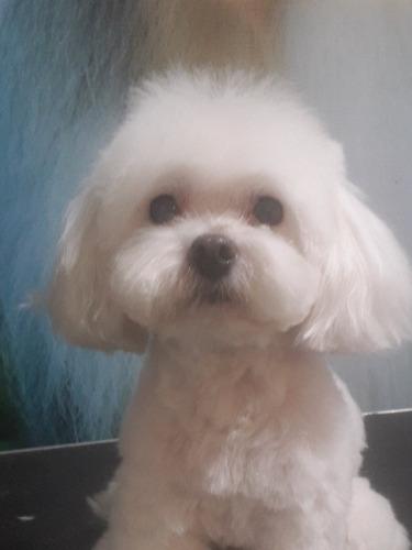 cursos de peluquería estética canina