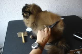 cursos gratis de peluquería canina / felina,  adiestramiento