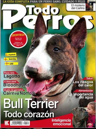d - todo perros - bull terrier