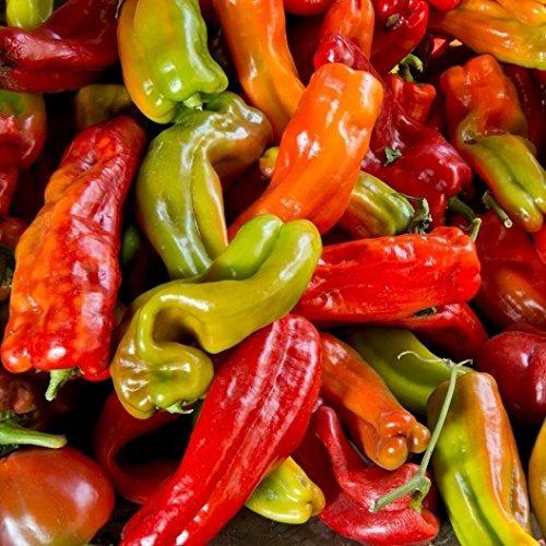david's garden seeds pepper chili anaheim chile sl112ab