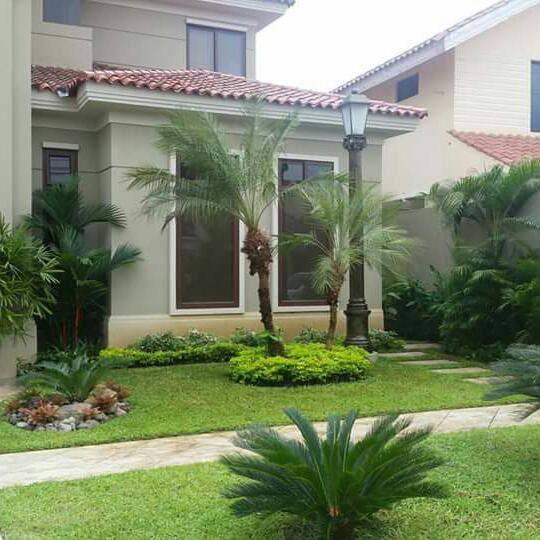Decoracion de jardines con palmeras cdmx y edo mex a for Jardines con palmeras