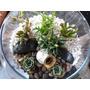 Regalo Ecológico - Terrarios De Plantas Suculentas Y Cactus