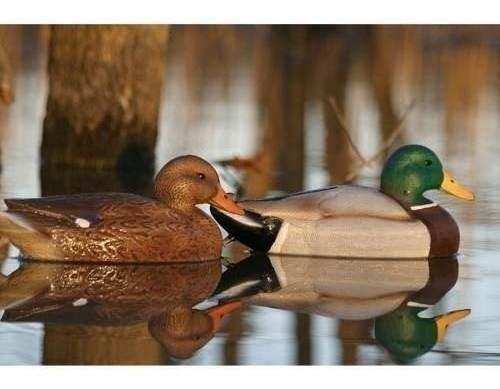 decoy o señuelo 4 patos flotante caceria tiro macho y hembra