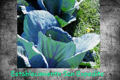 deliberi de huerta y plantas