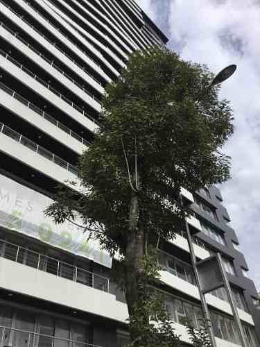 departamento en renta city towers colonia xoco