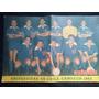 Estadio N° 1035 28 De Maezo De 1963 U Chile Campeon 1962
