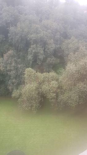depto. en renta en bosque de canelos, b. de las lomas
