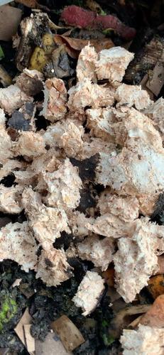 desarrollo de productos biobasados