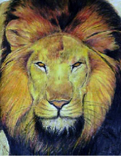 desenho hiper-realista leão lápis de cor