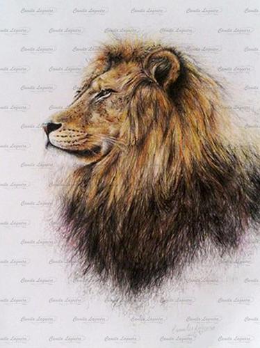 desenho realista leão lápis de cor