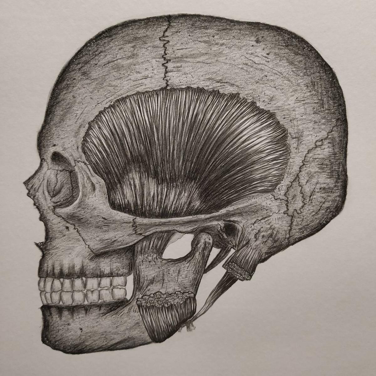 Desenhos Anatomicos Folha A4 Feito A Lapis R 50 00 Em