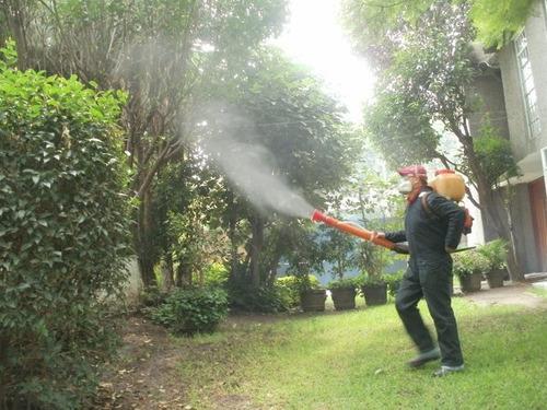 desinfecciones y fumigaciones en casas , locales y oficinas