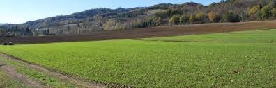 dia de comprar seu terreno no campo  005