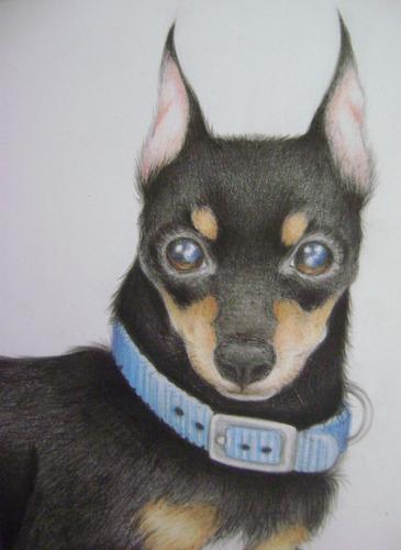 dibujo de tu mascota a creyón - con solo pasar una foto