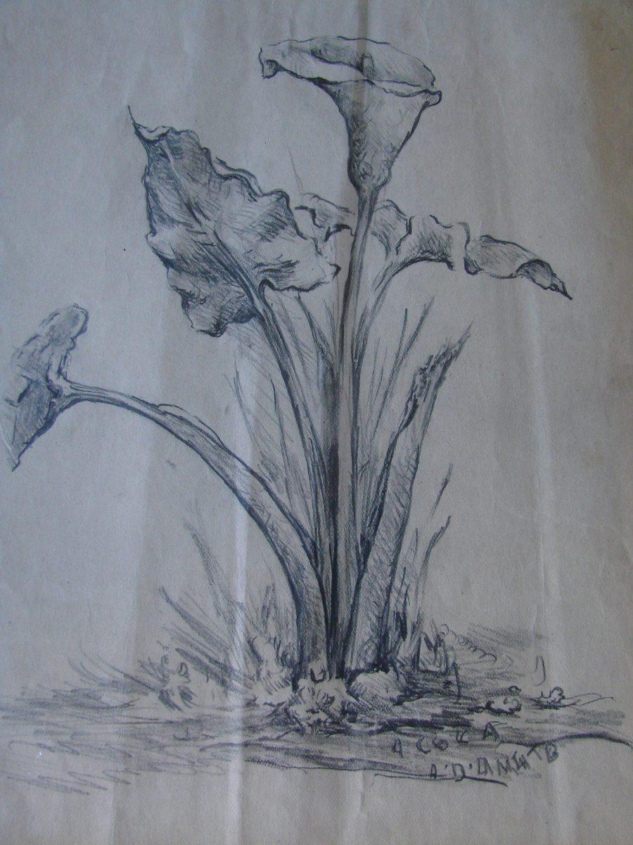 Dibujo Flores Lapiz A Damato 30000 En Mercado Libre