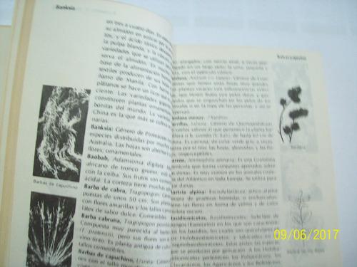 diccionario de botánica. edit. ediplesa