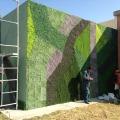 Dise o de muro verde artificial muros vertical plantas for Diseno de muros verdes