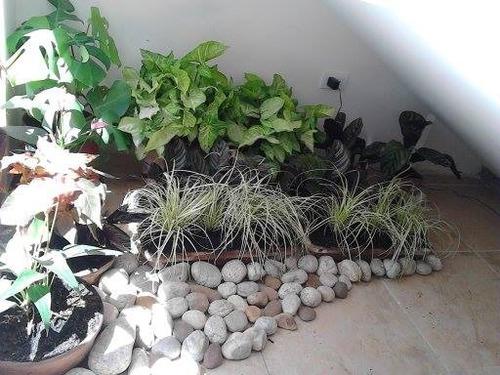 diseño decoración de jardines con riego automático