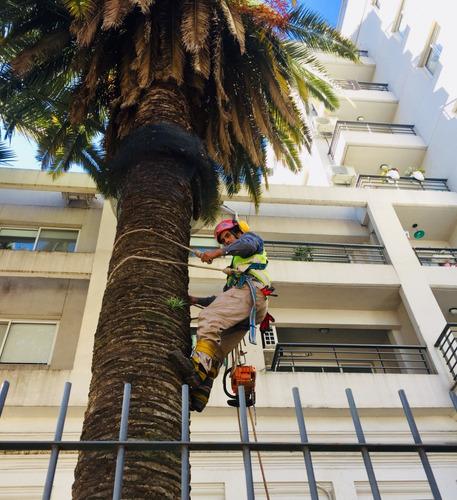 diseño mantenimiento de espacios verdes y podas en altura