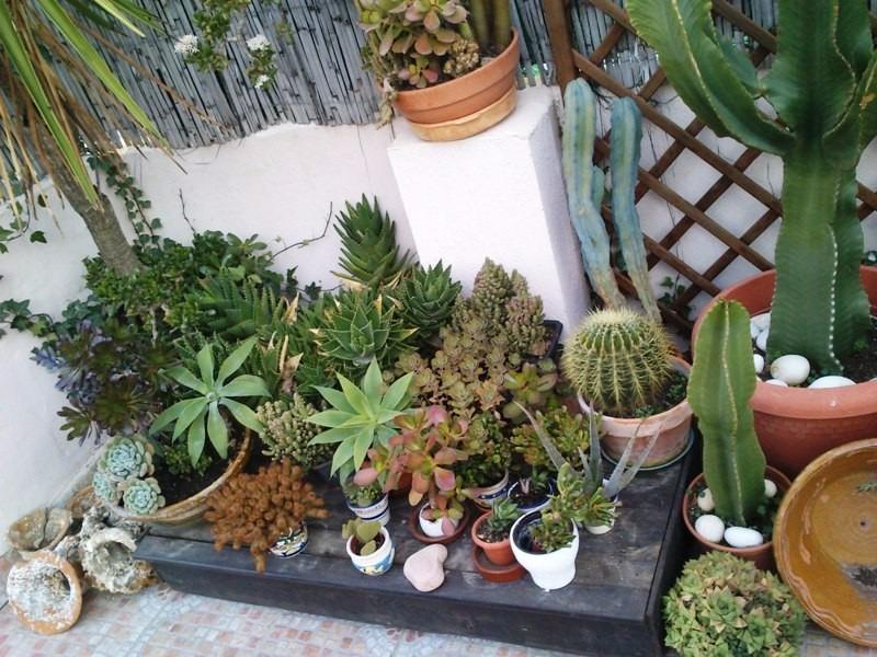 Dise o y mantenimiento de jardines terrazas y balcones for Jardines en terrazas y balcones