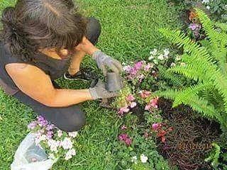 diseños mantenimiento de jardines paisajismo parquización