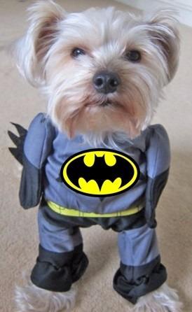 Disfraces Para Perros Y Gato Batman S 45 00 En