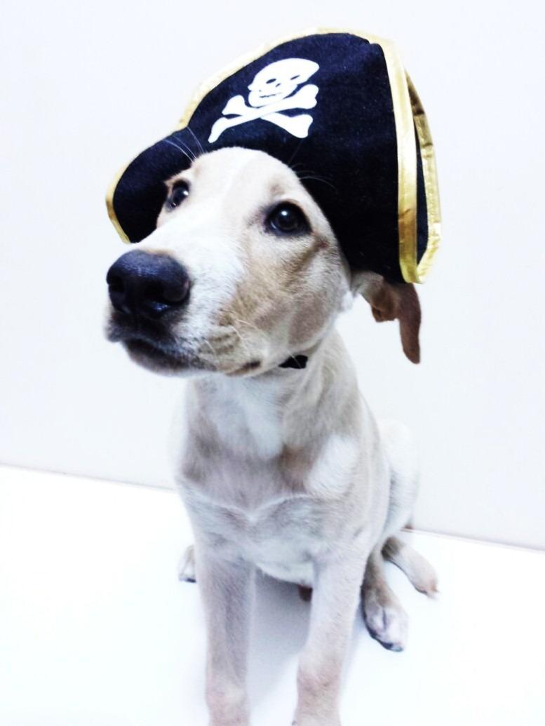 Disfraz De Pirata Con Sombrero Para Mascota Perro Gato Ropa ... b6cdfcae982