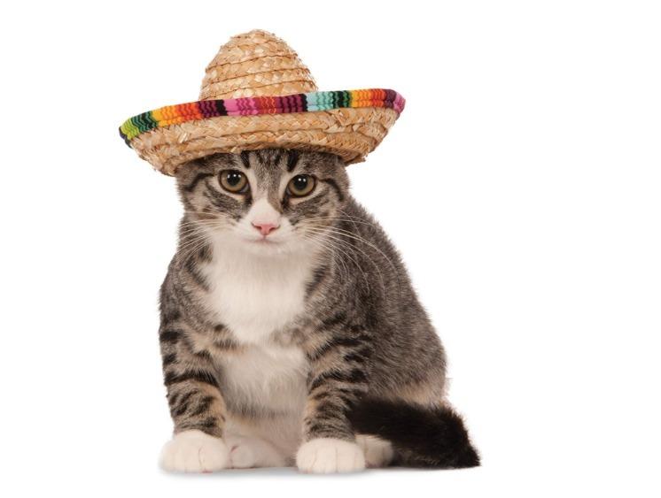 Disfraz Para Mascota En Forma De Sombrero -   250.00 en Mercado Libre f51066fc6e1