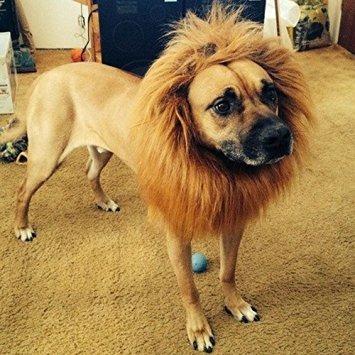 Disfraz Para Perro Looching Disfraces Para Perros Grandes