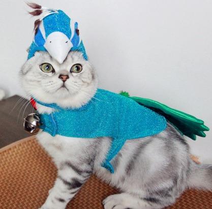 disfraz pavo real para gatos