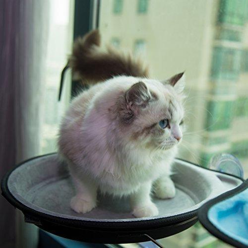 djane - hamaca para ventana de gato con ventosa asiento sole