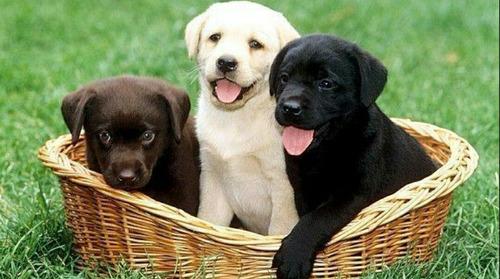 doaçao de cachorro