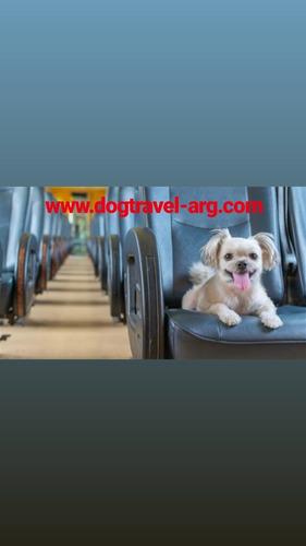 documentacion  de viaje para mascotas (perros gatos)
