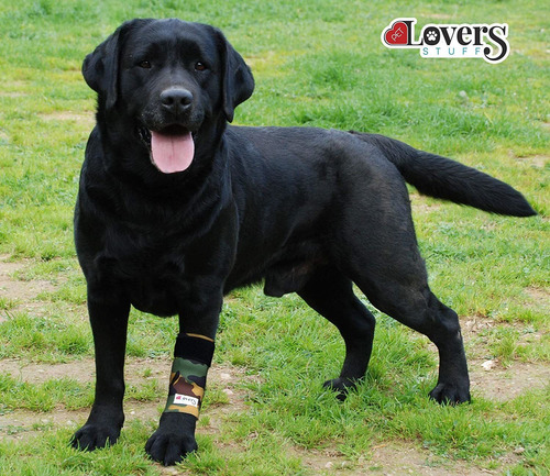 dog brace front leg support  pair of compression wraps...
